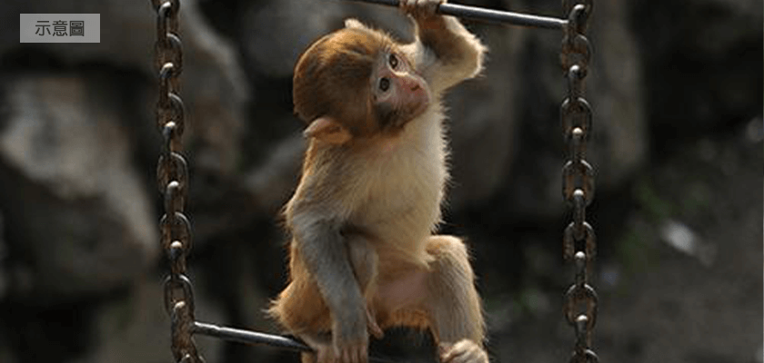 猴子示意圖840400